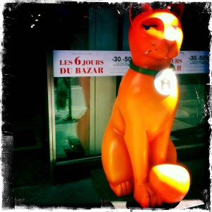 chat-geant-bhv