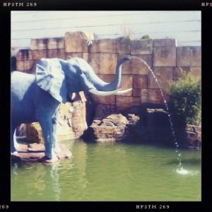 elephant-eau