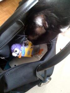 chat-sac-pigeon-pma-jouet-fouiller