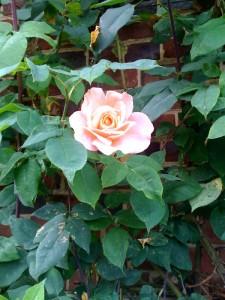 rose-paris-chasse-tresor-