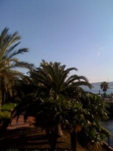 we-plage-cote-d-azur-palmiers