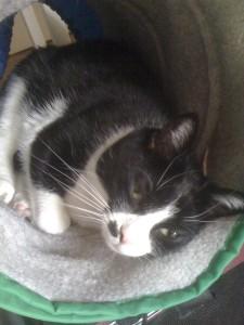 chat-dormir