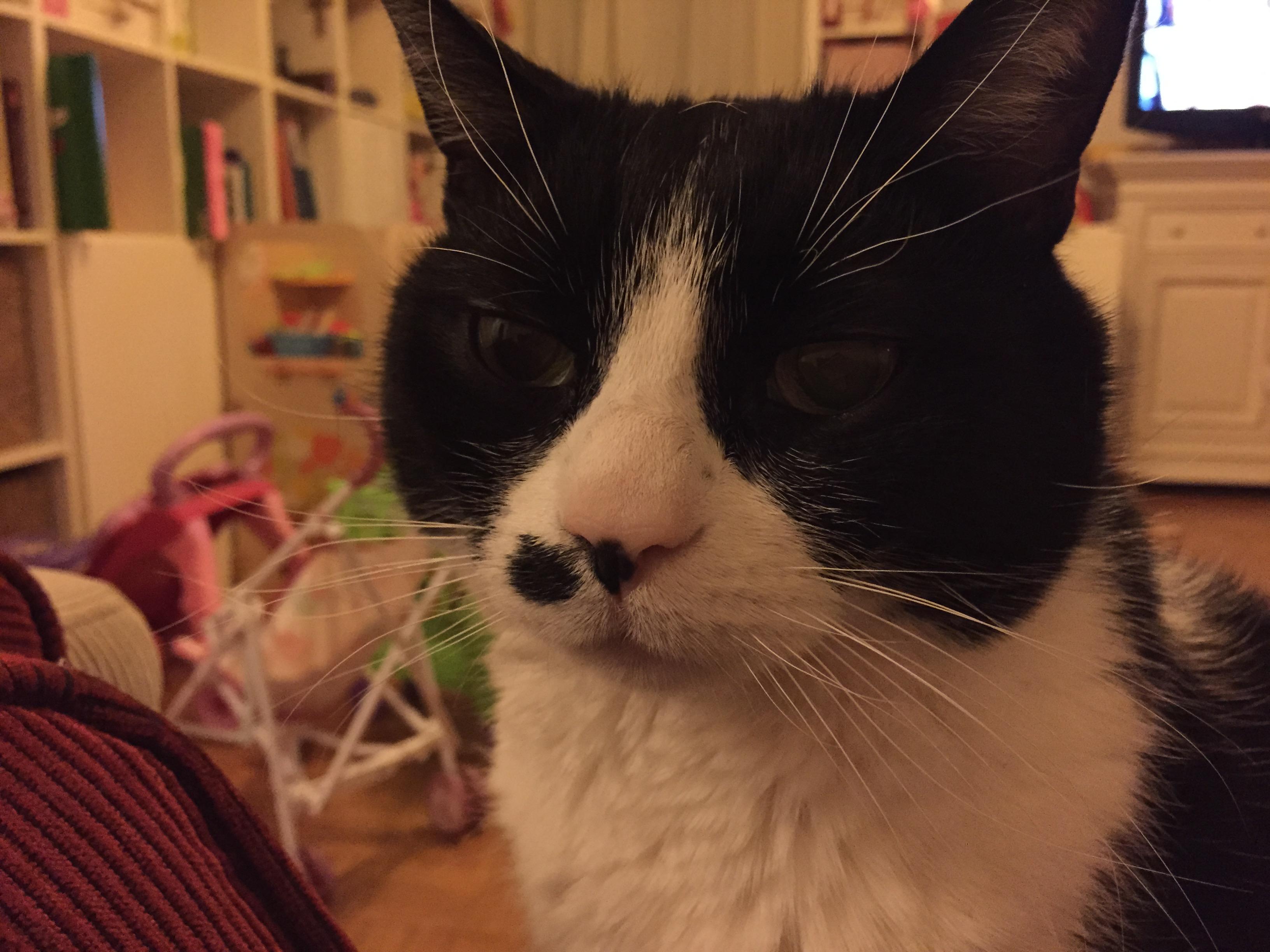 Des nouvelles du chat et de sa bronchite chronique.. - PMGirl