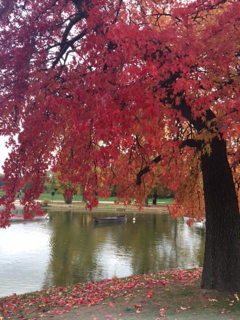 arbre rouge lac daumesnil