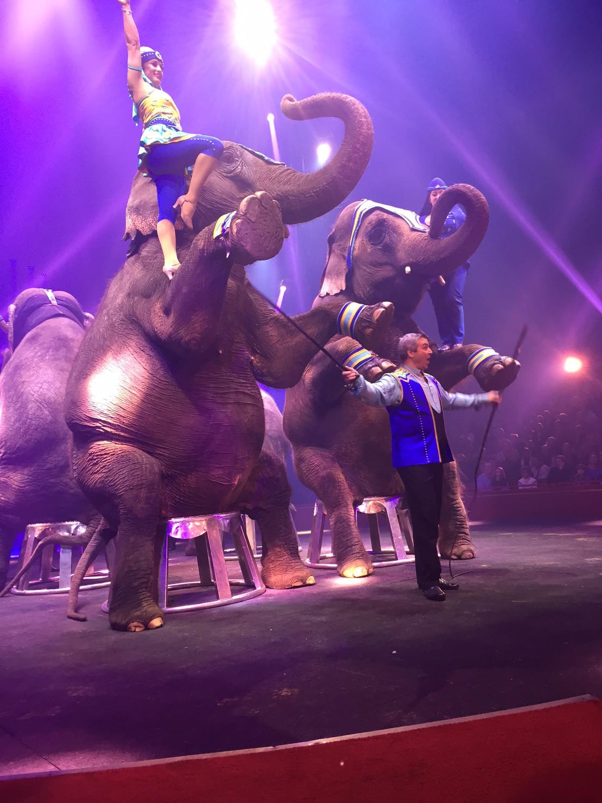 Cirque Arlette Gruss éléphant