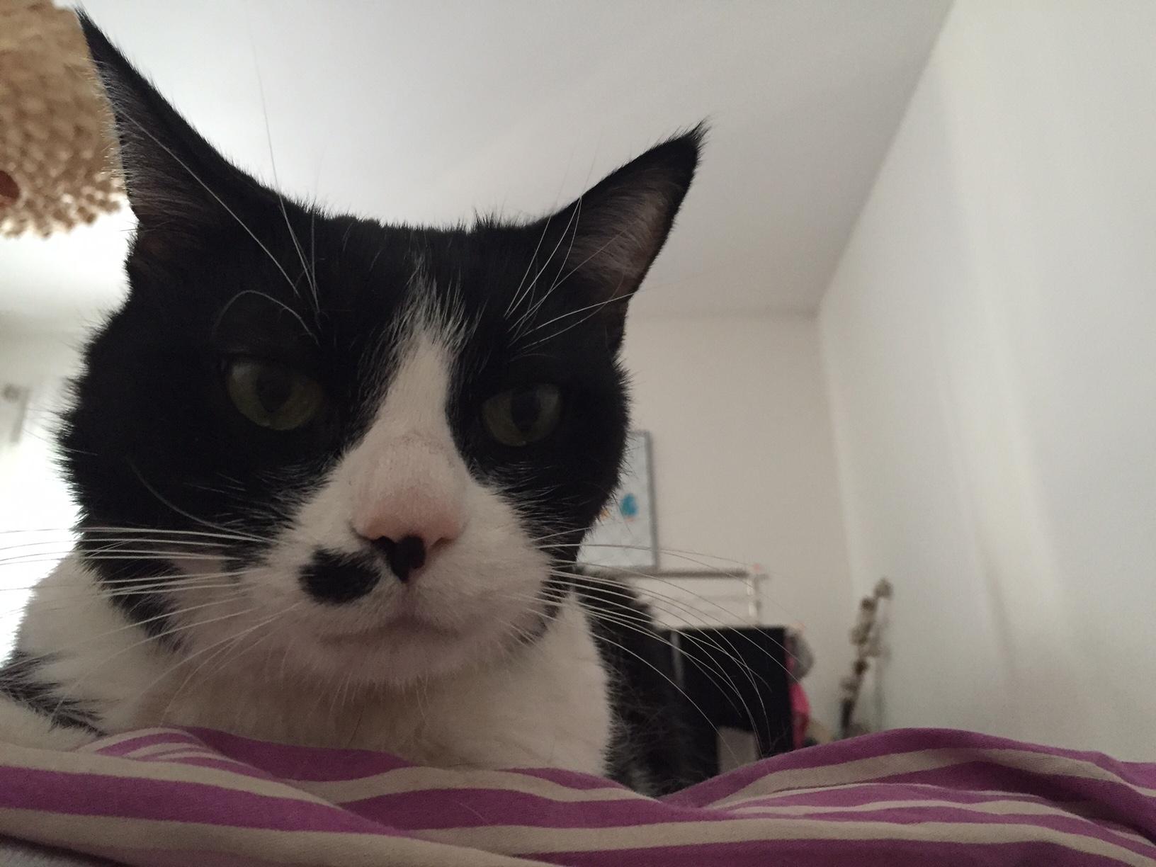 chat voyeur