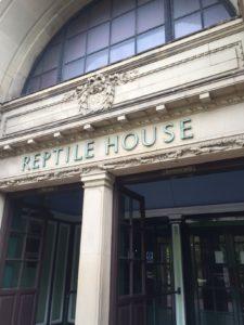 Londres avec un enfant de 3 ans zoo de londres reptile zone
