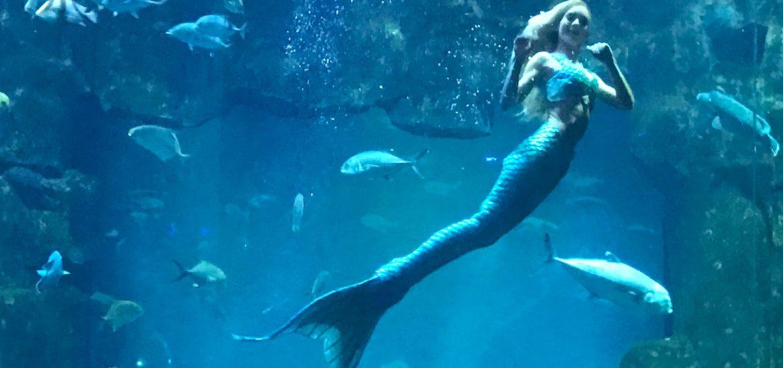 Visite Aquarium du Trocadéro sirène