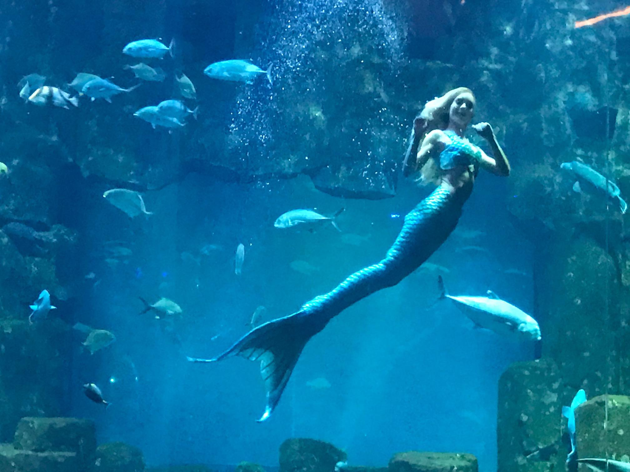 La rencontre avec la sir ne de l 39 aquarium de paris for Aquarium de paris jardin du trocadero