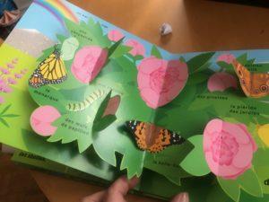 le livre pop up du printemps insectes