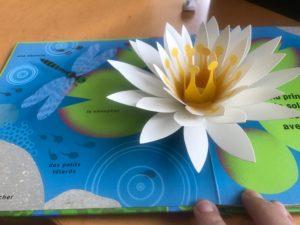 le livre pop up du printemps nenuphar