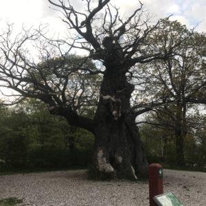 Copenhague en famille bakken arbres