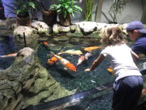 aquarium de Paris toucher les poissons